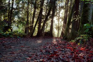 Sun-rays in the rain forest,Vancouver,Canada